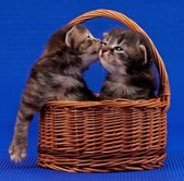 Cute kittens — Stock Photo