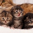 Stock Photo: Newborn kittens