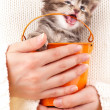 Cute kitten — Stockfoto #40479613