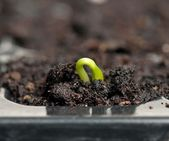 Young sprout — Stock Photo