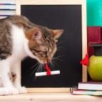 Scientific cat — Stock Photo