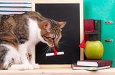 Scientific cat — 图库照片