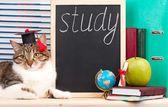 Scientific cat — Stock fotografie