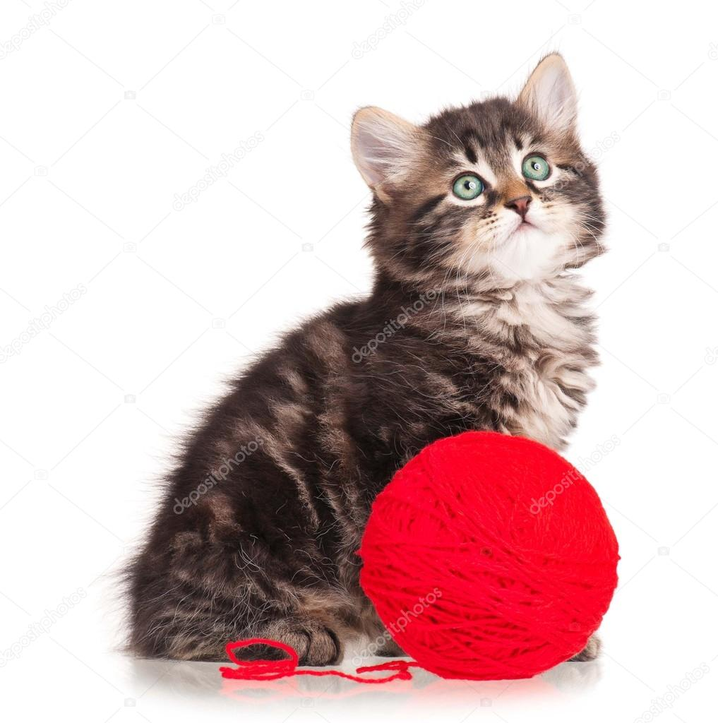 可爱的小猫 — 图库照片082002lubava1981#4395246