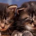 Newborn kittens — Stock Photo #44259279