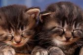 Newborn kittens — Stock Photo