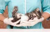 Cute kitten — Stock Photo