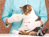 Veterinary survey — Stock Photo