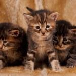 Cautious kittens — Stock Photo #45135313