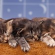 Newborn kittens — Stock Photo #45135365