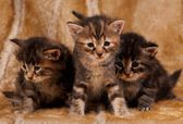 Cautious kittens — Stock Photo