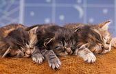 新生小猫 — 图库照片