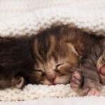 Newborn kittens — Stock Photo #45596027