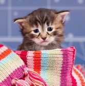 Sad kitten — Stock Photo