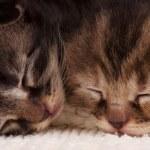 Newborn kittens — Stock Photo #46189281