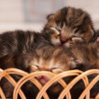 Newborn kittens — Stock Photo #46233499