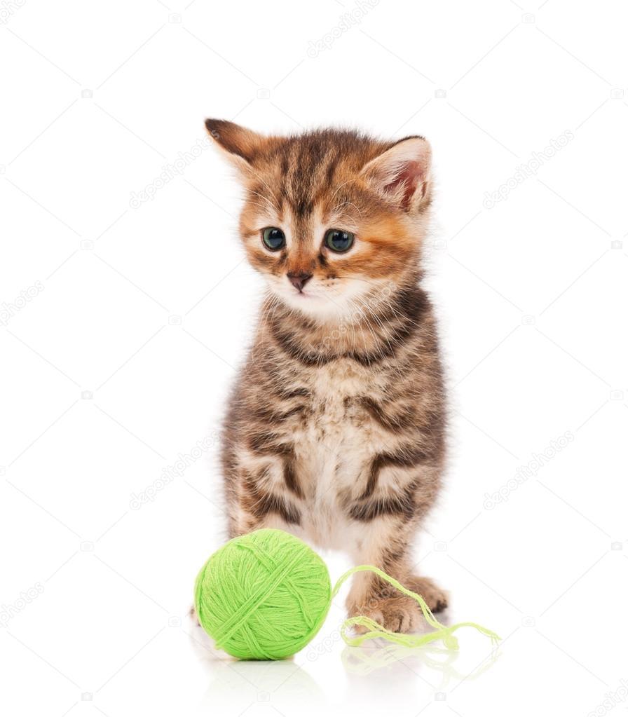 可爱的小猫玩球的白色背景上的绿色线程
