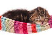 Asleep kitten — Stock Photo