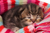 милый котенок — Стоковое фото
