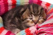 şirin kedi yavrusu — Stok fotoğraf
