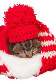 Asleep kitten — Stock Photo