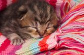 Neonate kitten — Stockfoto