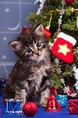 Pluizig kitten — Stockfoto