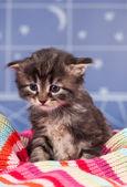 Sad kitten — Stock Photo