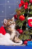 Cute kitten — Стоковое фото