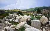 The sheep in the ruins of ancient town Patara, Turkey — Stock Photo