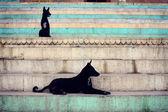 Black Dogs — Stock Photo