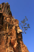 Beautiful view of rock cliffs with a young tree - the Himalayas, India — Stock Photo