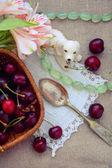 Estate natura morta con ciliegie di bacche un cucchiaio d'argento e un cane di porcellana bianca — Foto Stock