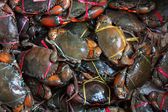 Fresh live crabs on the market in India, close-up — Stock Photo
