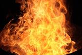 Fire Background - burning flame languages — Stock Photo