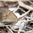 Butterfly resting — Stock Photo