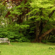 Stock Photo: Park bench with tree nearby