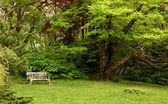 Park bench with tree nearby — Stock Photo