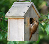 Birdhouse mother bird with food — Photo