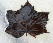 Listy na ledě — Stock fotografie