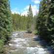 Canadian Rockies stream view near Banff — Stock Photo