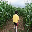 Boy in corn maze — Stock Photo