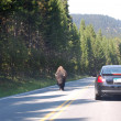 Yellowstone park road - Bison — Stock Photo #12136386