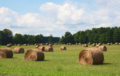 Bales of hay in field — Stock Photo