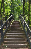 Steps in forest — Stock Photo