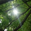 Stockvideo: Sun in Trees