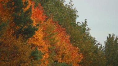 Autumn forest — Stockvideo