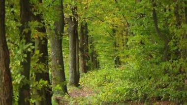秋の森 — ストックビデオ