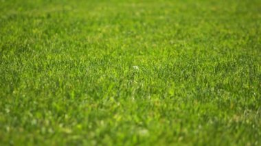 緑の芝生 — ストックビデオ