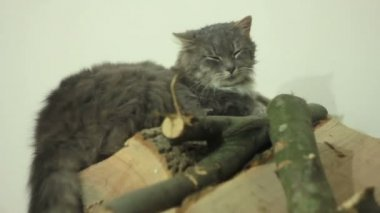 Cat over logs — Stockvideo